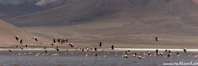Reserva Nacional Las Vicunas - Salar de Surire