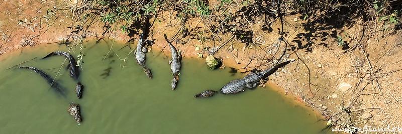 Pantanal Nord