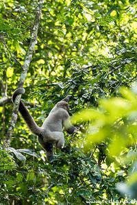 Cuyabeno Reserve