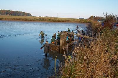 Výlov rybníka Doubí