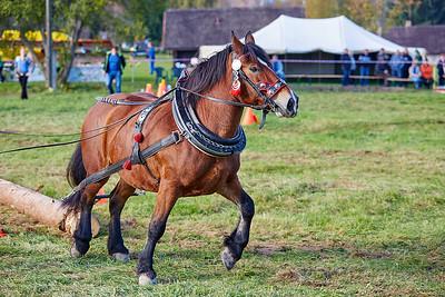 Mistrovství ČR 2014 v kombinovaných soutěžích chladnokrevných koní