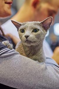 Světová výstava koček – FIFe World Cat Show Prague 2014