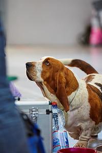 XXVII. mezinárodní výstava psů všech plemen FCI