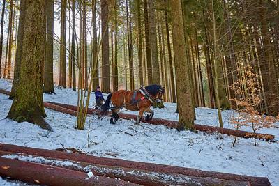 Psí spřežení, těžba dřeva koňmi a Dlouhé stráně – Jeseníky | Dog sled, wood harvesting with horses and Dlouhé stráně Hydro Power Plant – High Ash Mountains