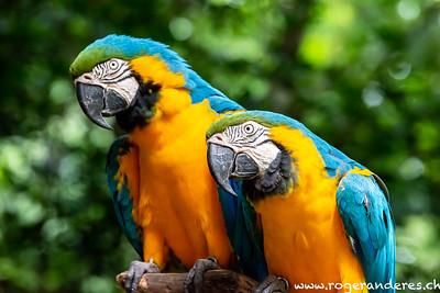 Foz do Iguacu-Parque das Aves