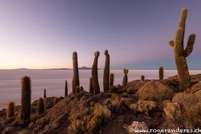 Salar Uyuni - Island Incahuasi