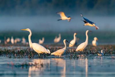 Wasservögel am Salzsee