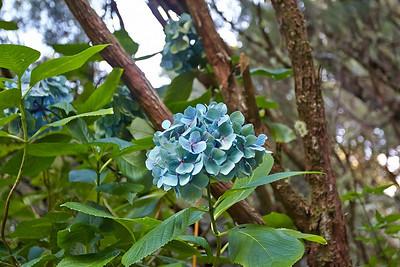 Madeira – perla Atlantiku
