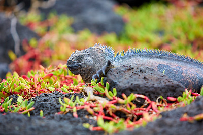 Galapágy | Galápagos Islands