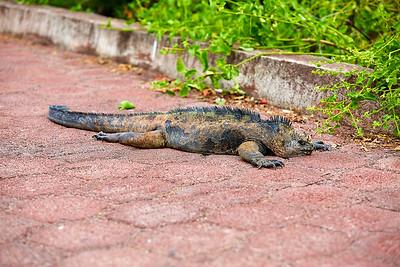 Galapágy | Galápagos Islands
