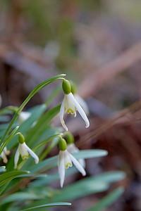Jarní Blanice