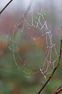 Pozdní podzim na Šumavě