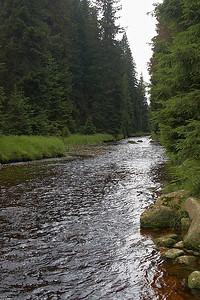 NP Šumava – Modravské slatě