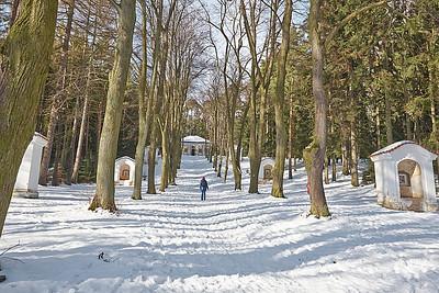 Jaro už se hlásí aneb výlet ze Všenor do Mníšku pod Brdy