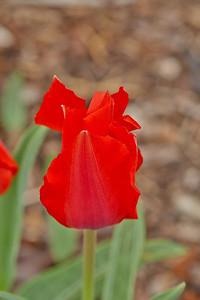 Z Drahanského údolí do botanické zahrady aneb krásy jara