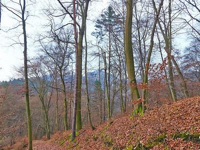 Z Berouna do Karlštejna