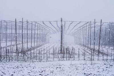 Hopfengarten im Winter
