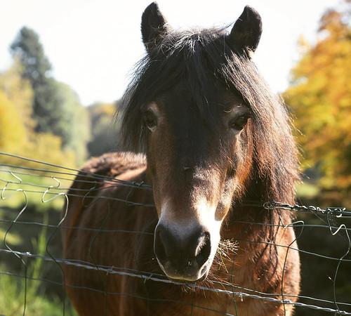 Pferd_v1_3600px