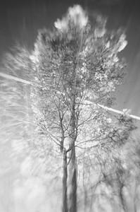 Bäume 03