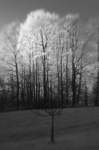 Bäume 02