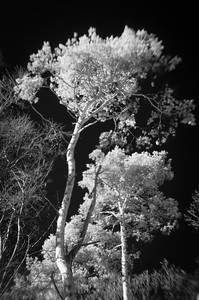Bäume 05