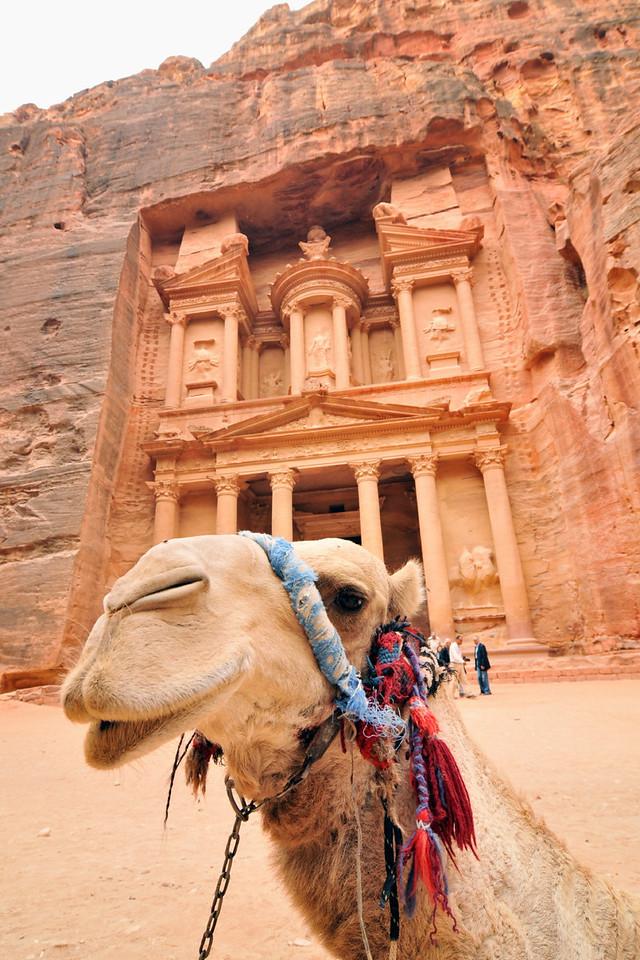 Dromedar vor dem Schatzhaus (Khazne Faraun) in Petra. Die berühmte Nabatäerstadt Petra, Jordaniens größte touristische Attraktion, liegt geheimnisvoll verborgern inmitten einer Felslandschaft