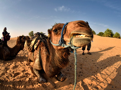 Merzouga-Wüstenausflug
