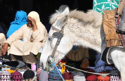Esel und Verkäuferinnen am Eingang zu den Souks am Djema el Fna