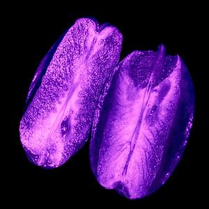 Sternfrucht - UV Licht