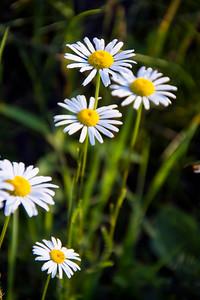 140629-flower-0209