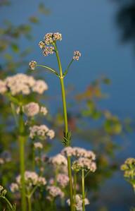 140629-flower-0196