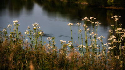 140629-flower-0217