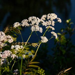 140629-flower-0148