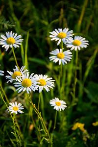 140629-flower-0211