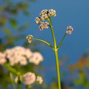 140629-flower-0196B