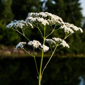 140629-flower-0141