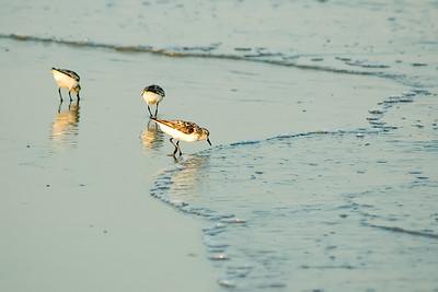 Oiseaux sur la plage.