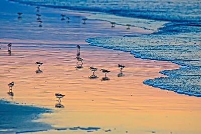 Oiseaux au coucher du soleil.