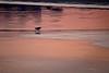 Oiseau seul sur la plage.