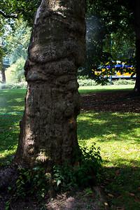 Tronc d'arbre à Central Park.