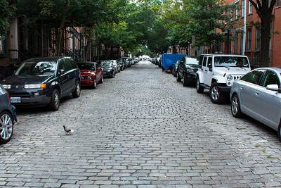 Pigeon dans la rue.