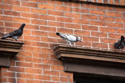 Oiseau sur la fenêtre.