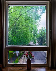 Fleurs à la fenêtre.