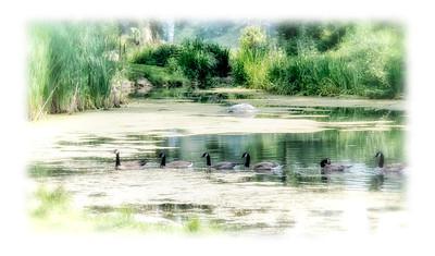 150729-Centre Nature-052