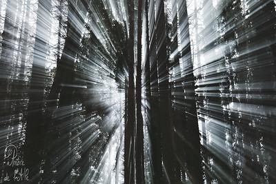 Décollage | Transcendance