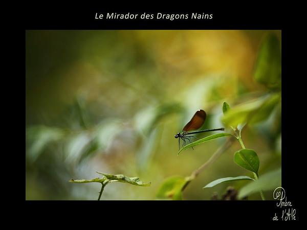 Le Mirador des Dragons Nains