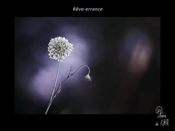 Rêve-errance