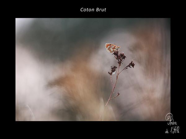 Coton Brut