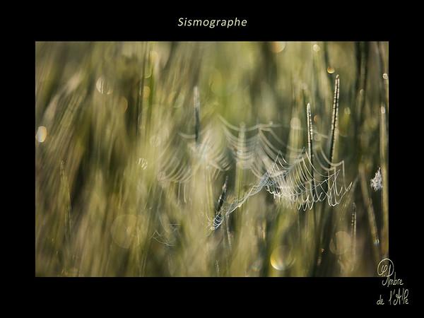 Sismographe