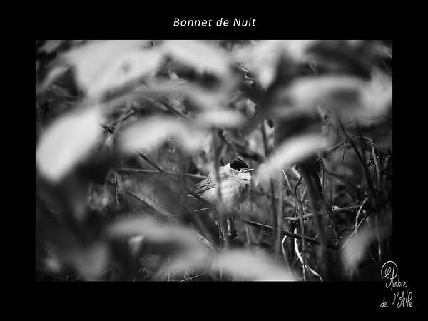 Bonnet de Nuit